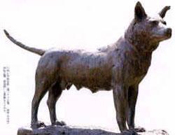 忠犬タマの画像
